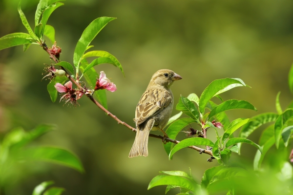 His Eye Is on the Sparrow: Old First E-pistle 07.20.18 by Alesha Thomas